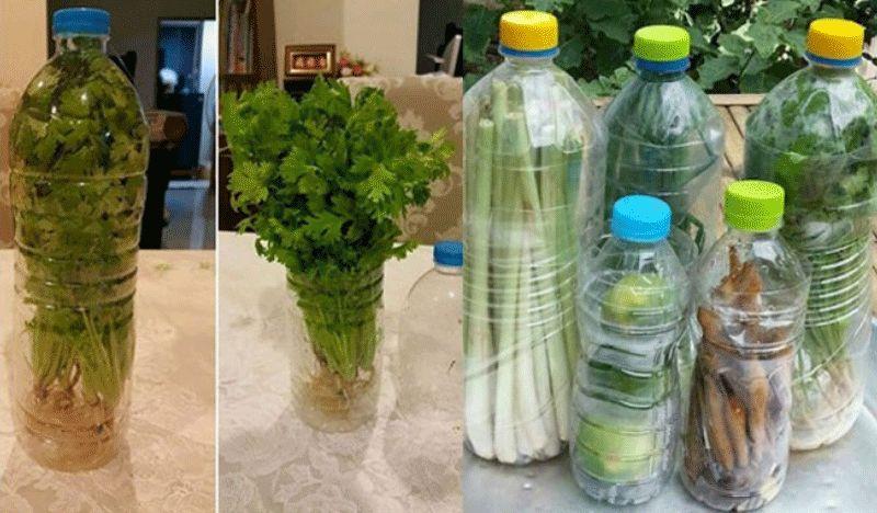 sayuran-awet-segar-dengan-botol-bekas